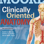 clinically oriented anatomy pdf by keith l moore