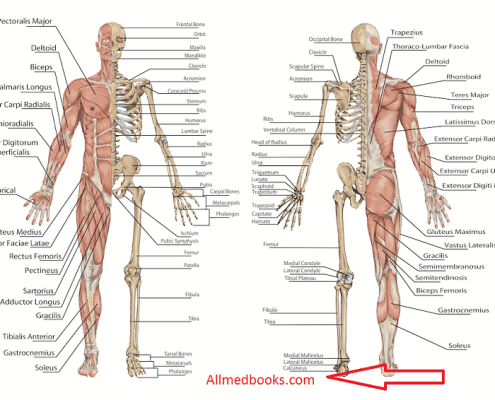 recommended anatomy books list