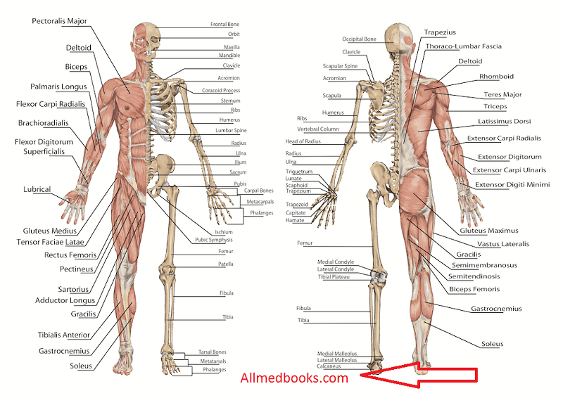 Recommended Anatomy Books 2017